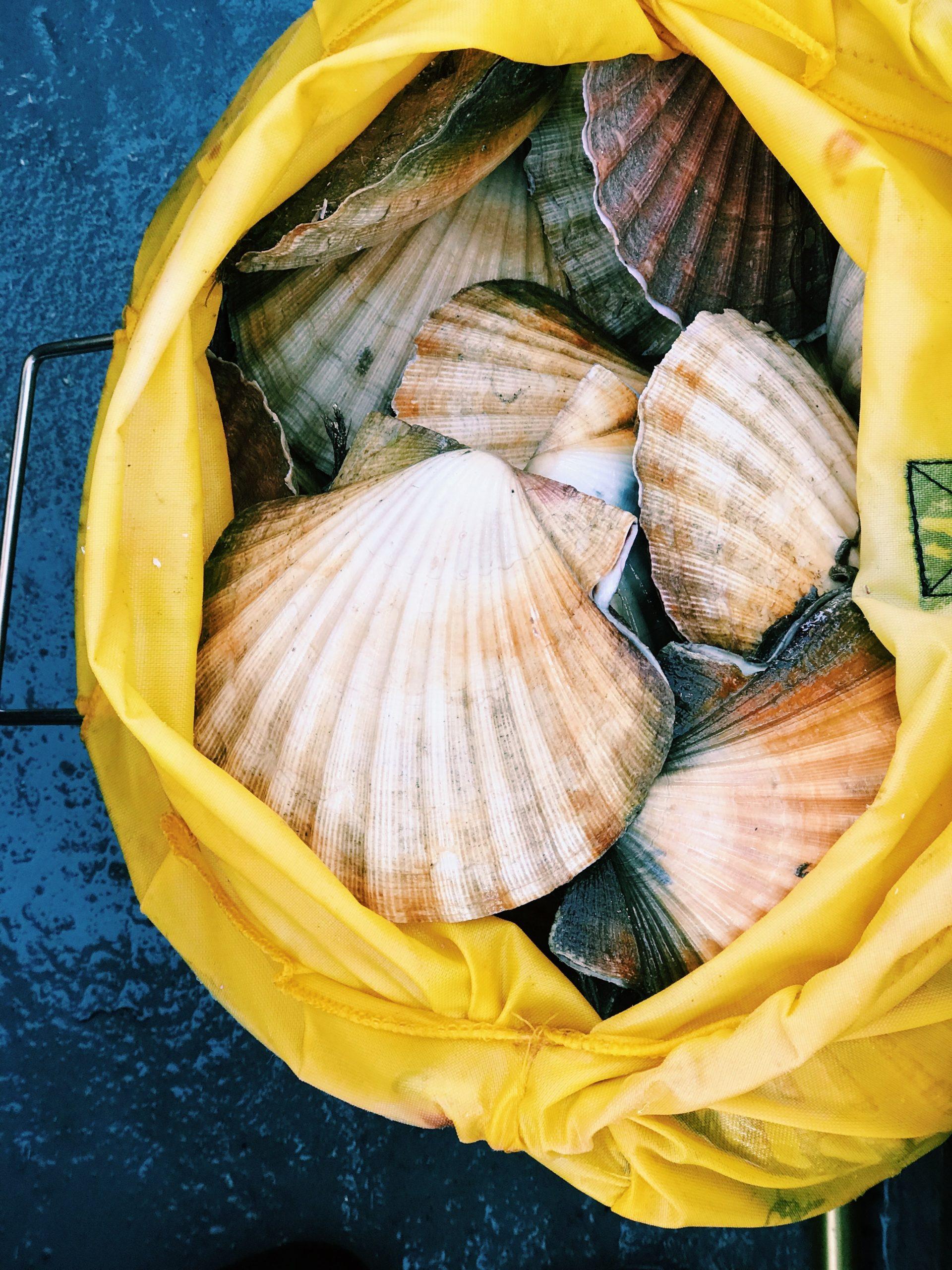 海のエコマークを知っていますか?